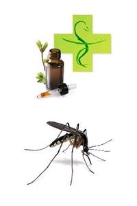 huiles-essentielles-moustiques2