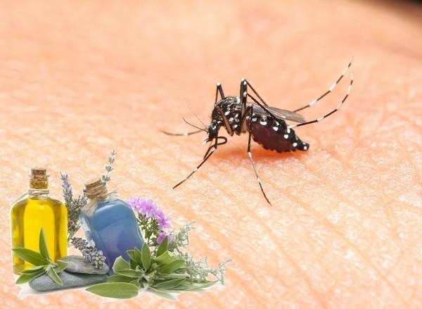 chikungunya pr paration huile essentielle contre le moustique tigre. Black Bedroom Furniture Sets. Home Design Ideas
