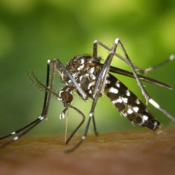 comment éviter les moustiques tigres