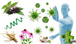 Defensas inmunitarias y medicina herbaria