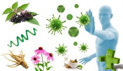 Immune defences and herbal medicine