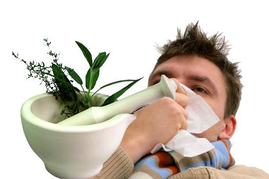 Kräutermedizin zur Behandlung von Winter Krankheiten