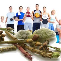 Deporte y Gemmotherapy: los beneficios de los macerados glycerinated en los atletas