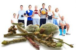 Sport und Gemmotherapie: die Vorteile von mameraten Glycerin auf Sportler