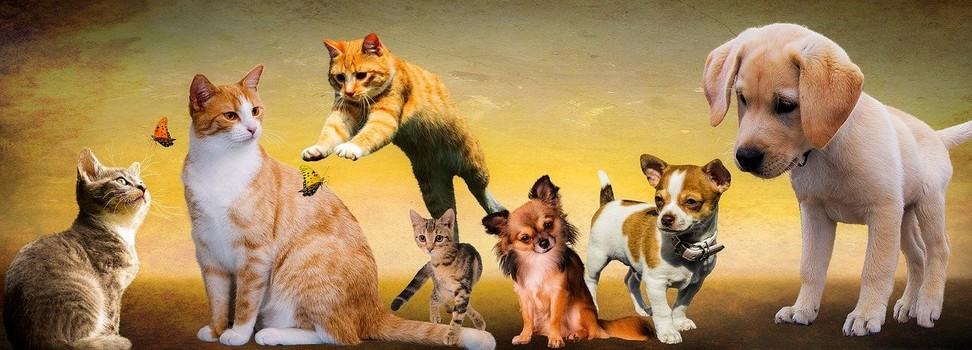 soins vétérinaires bio