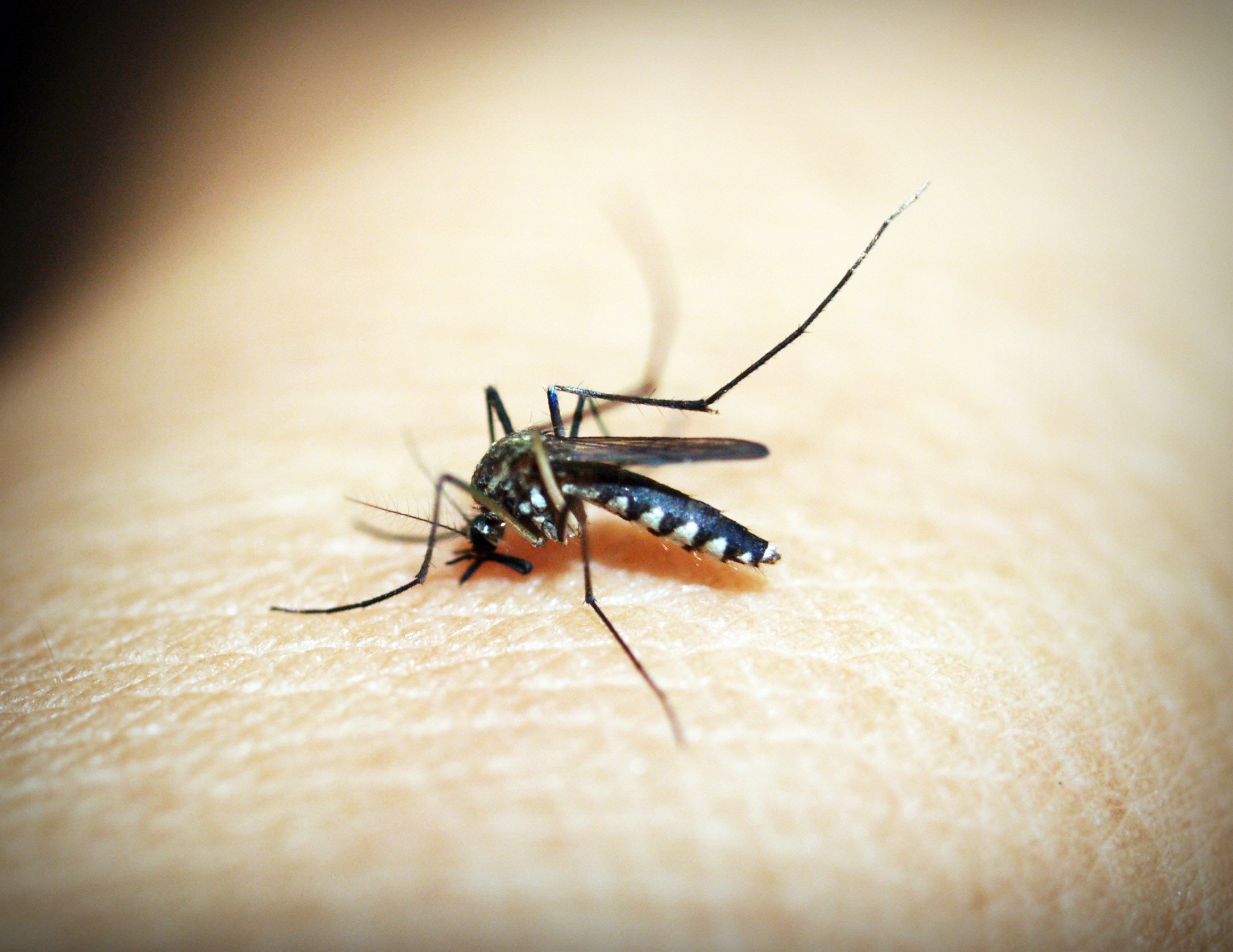 naturopathic advice to limit the inconvenience of an insect bite