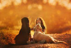 Tratamento natural para dermatófitos caninos