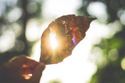 Chaleur caniculaire de l'été et plantes médicinales