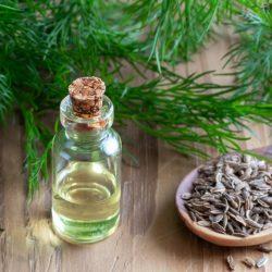 Propriétés pharmacologiques de l'huile essentielle d'aneth
