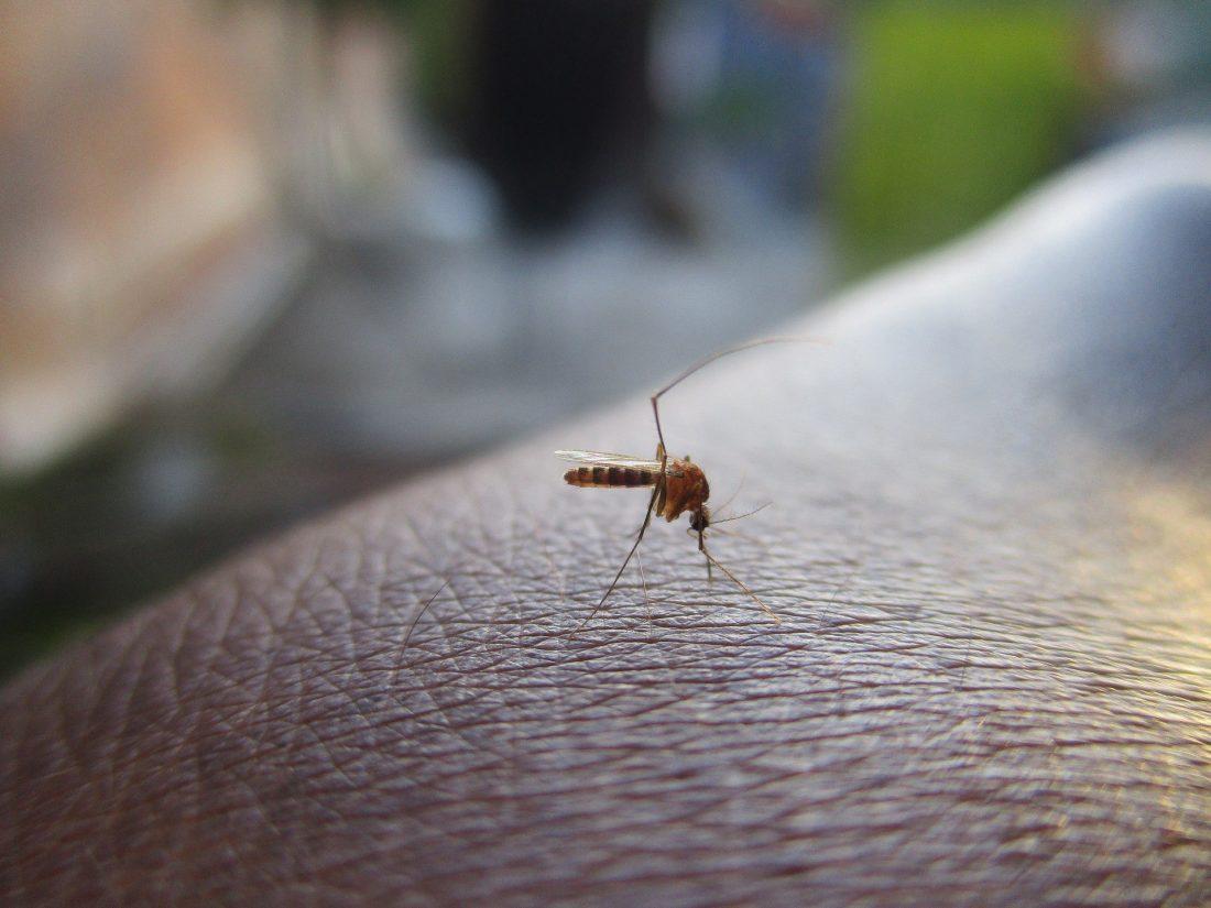 braccialetto repellente per zanzare