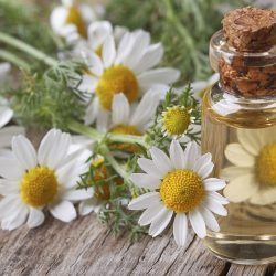 Huile essentielle de capitule fleuris de Camomille Noble
