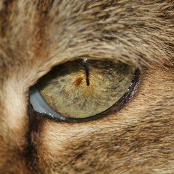 tratamiento del resfriado común en gatos