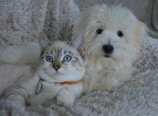 Olhos, orelhas, pele, pelagem de cães e gatos: tratamentos naturais
