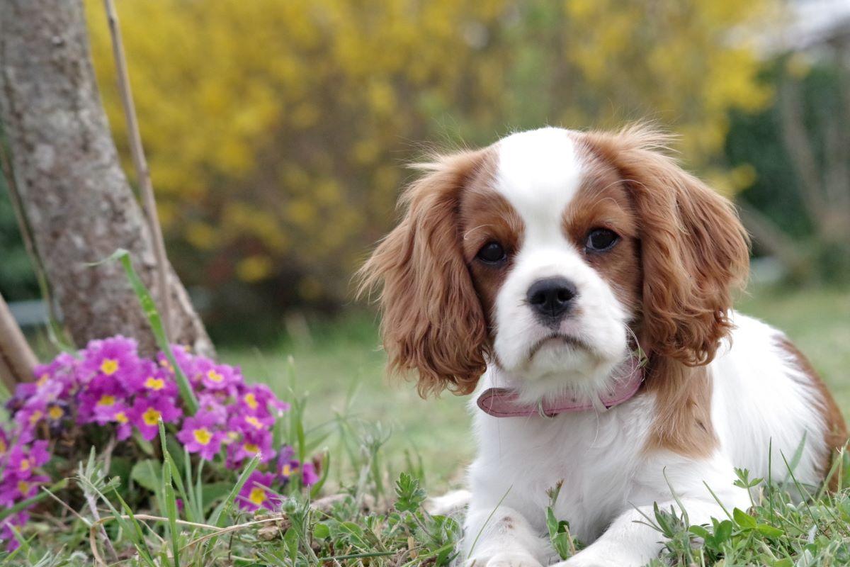 ¿Cómo elegir el collar de control de plagas adecuado para su perro?