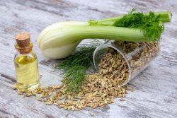 Beneficios del aceite esencial de hinojo amargo